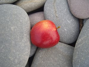 Apple on pebbles